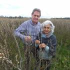Tony and Afsaneh Howey are leading the organic blackcurrant charge at their Pleasant Point farm....