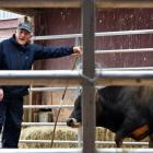 PGG Wrightson agent Mike Broomhall spots a bid at the Ashvale Annual Jersey Bull Sale in Western...