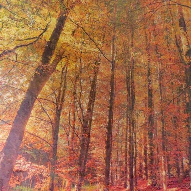 """Autumn trees, Three Mile Hill"", by Murray Crawford."