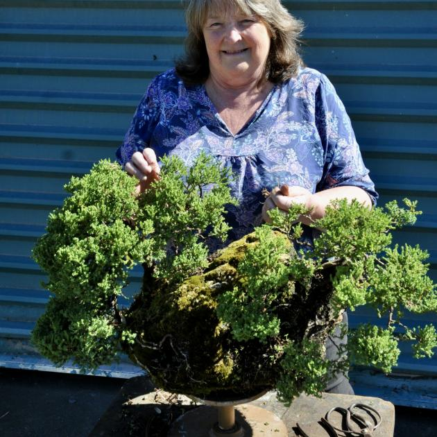 Linda's garden, with its 25-year-old Juniperus procumbens bonsai tree named 'nana' growing out of...