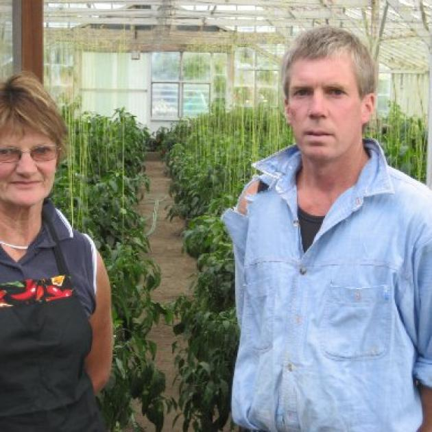 Chilli indoors... Viviene Scott and Chris Larcombe by one of thier glasshouses.  Photo by Charmian Smith
