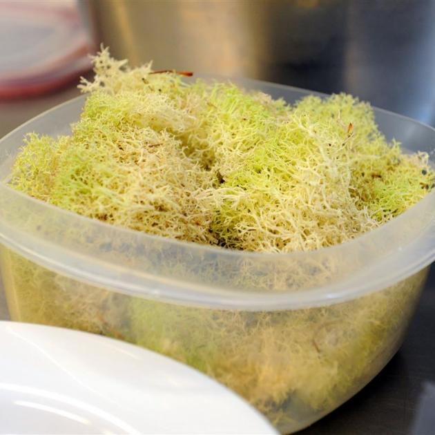 West Coast moss.