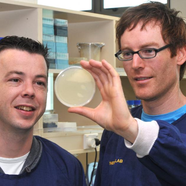 University of Otago Associate Prof Peter Fineran (right) and postdoctoral fellow Dr Raymond...