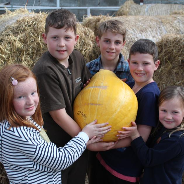 Holding their winning giant pumpkin are Clutha Valley School pupils (from left) Olivia Jack (8), Harry (10), Flynn (11), Max (8) and Ruby McHaffie (6) at the Giant Pumpkin Competition in Balclutha yesterday. Photo: Samuel White.