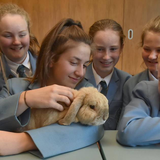 Bun Bun La Hop the rabbit enjoys the attention of St Hilda's Collegiate pupils (from left) Stella...