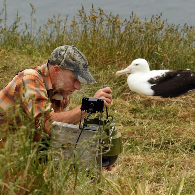 Cornell University's Charles Eldermire tinkers with the Royal Cam at the Dunedin's albatross...