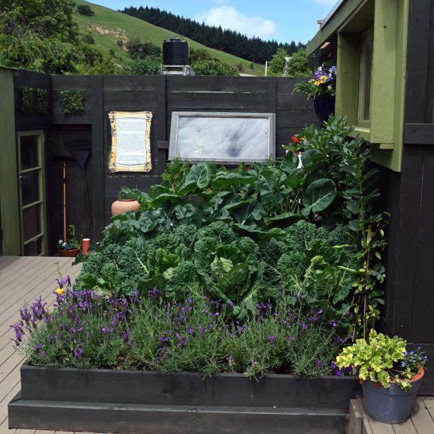 Cabbages and beans are among a wide range of vegetables growing in raised beds.