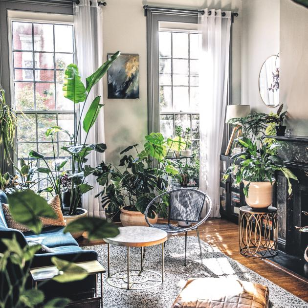 "In the Baltimore living room of Megan Hipsley and Justin Temple, the ""statement plant"" could..."