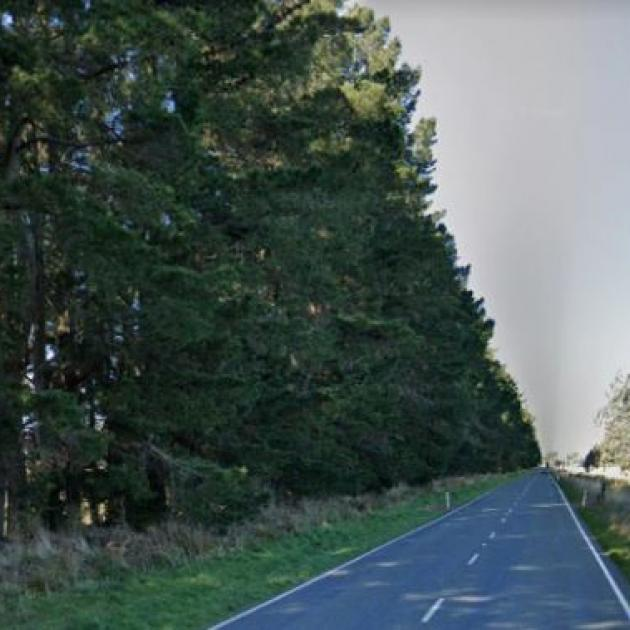 The Christchurch man punched a contractor over tree-trimming. Photo: Google