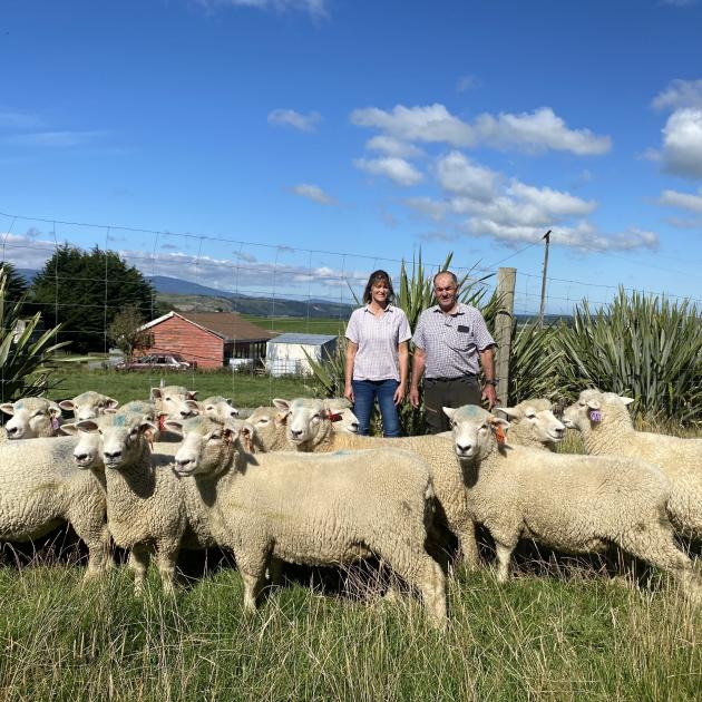 Fiona and Dean Addenbrooke inspect 15 ewes they recently bought from the Kikitangeo romney...