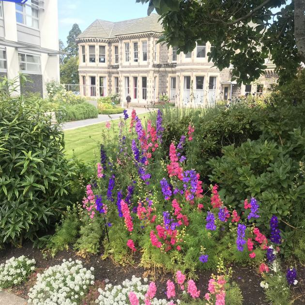 Bright larkspurs with the original bluestone homestead in the background.