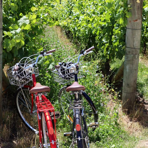 Wine-tasting by bicycle in Wairarapa. Photo: Getty Images.