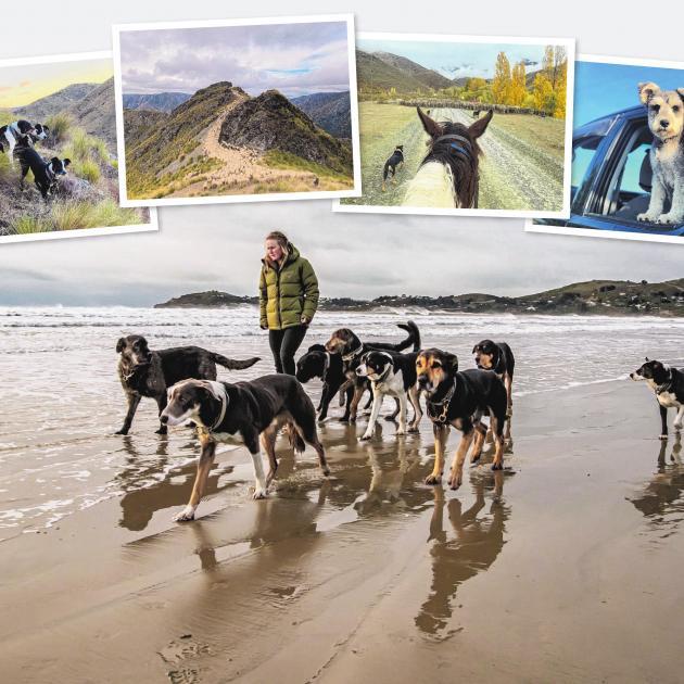 Dogs play a crucial role in Kate Poulsen's job as a casual shepherd.MAIN PHOTO: KERRI BACK...