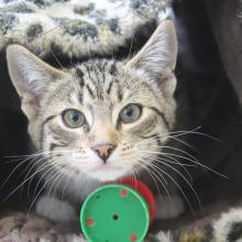 Invercargill SPCA has 111 kittens available for  adoption. Photo: Ben Waterworth