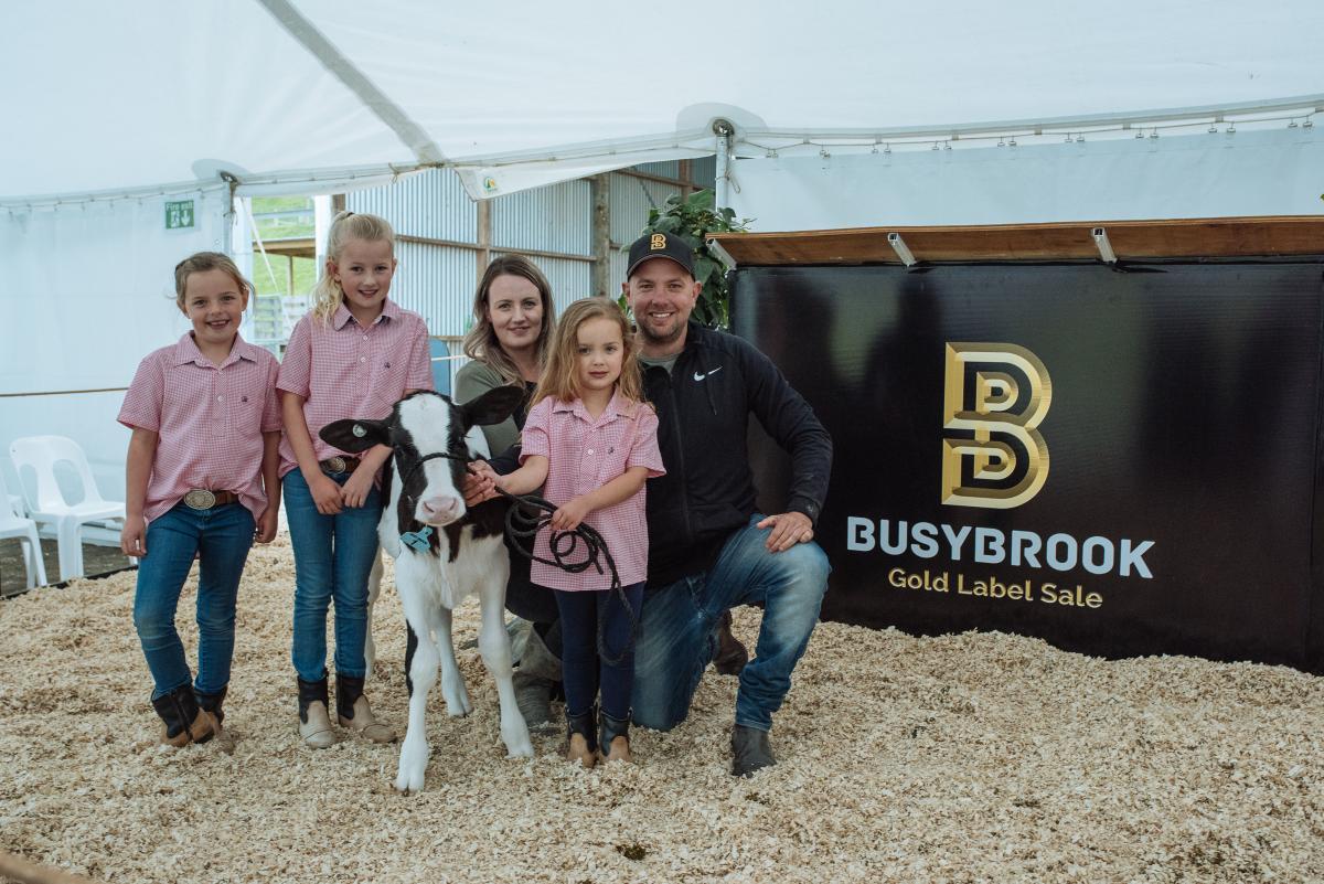 $35,000 paid for Holstein calf