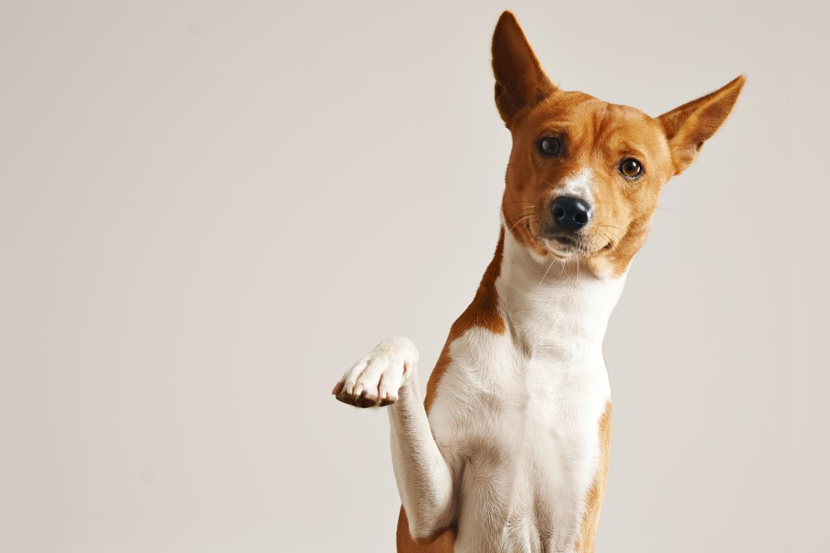 What's going on in your dog's head? - Otago Daily Times 1