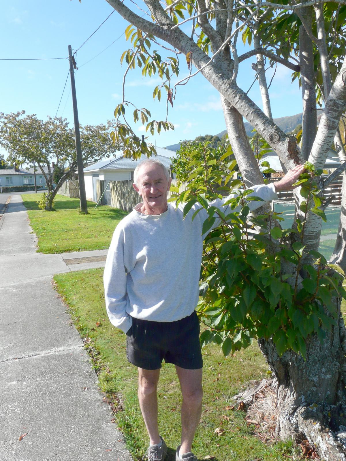 Mixed reaction to planned tree removals