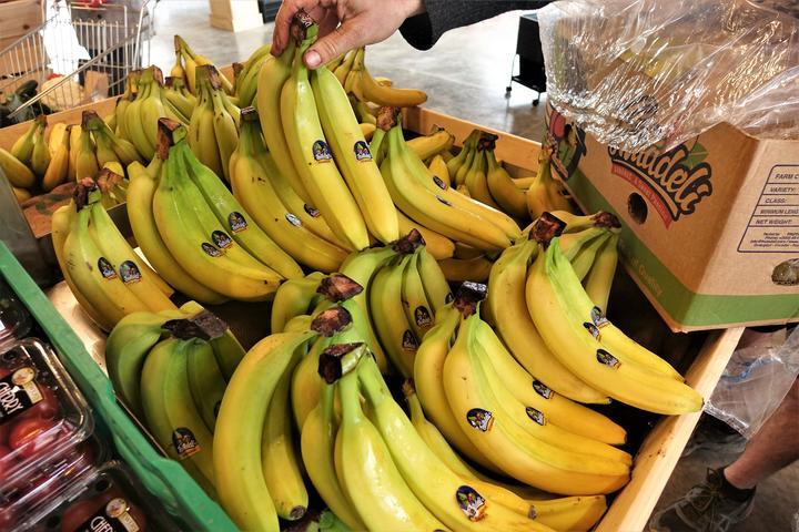NZ could go bananas over climate change
