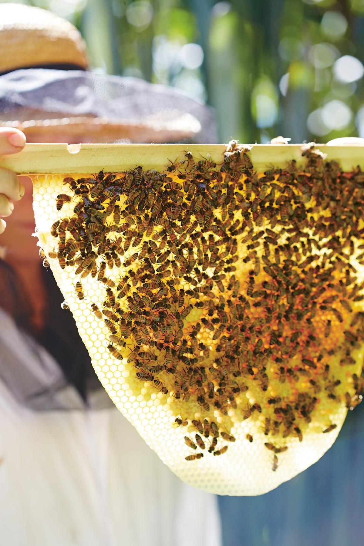 Make your garden bee-friendly