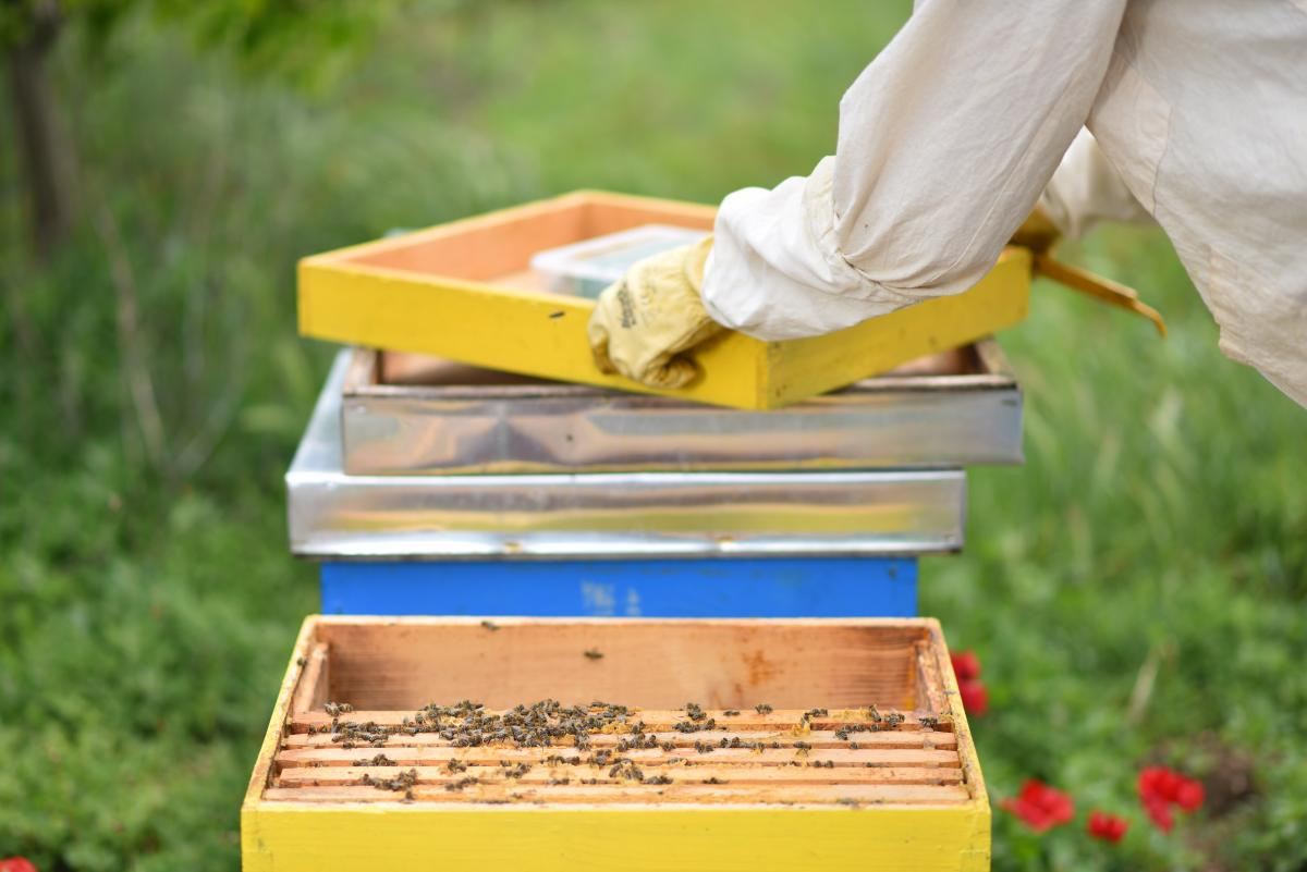 Urban bees remain vital part of our ecosystem