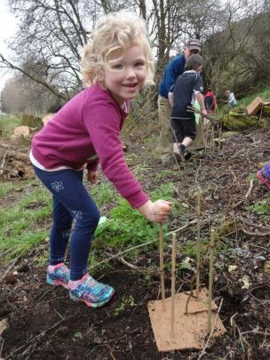Alice Ransby (5), of Kakanui, helps  plant a native tree at Clark's Mill at Maheno yesterday to...