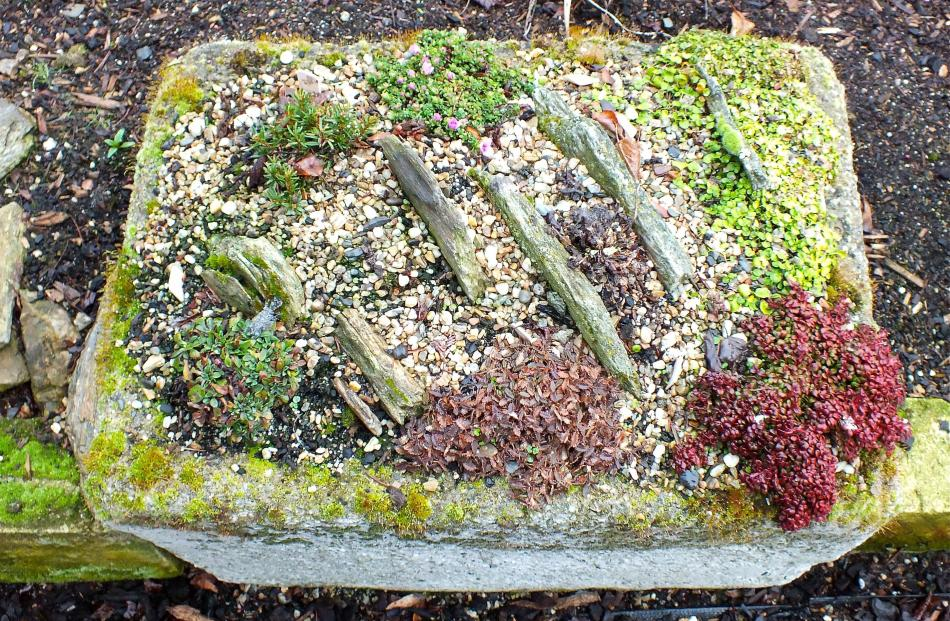 Troughs keep tiny treasures from being lost. PHOTO: GILLIAN VINE