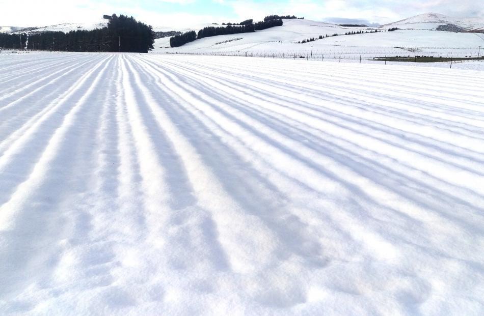 Snow on the Shadowland Saffron field at Te Anau.