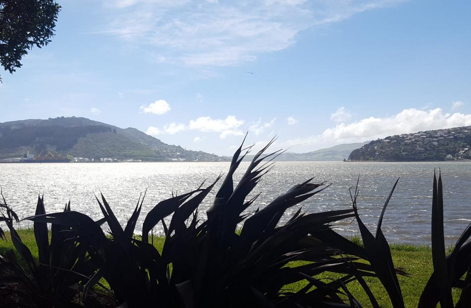 Otago Harbour from the Kitchener St reserve. Photos: David Loughrey.