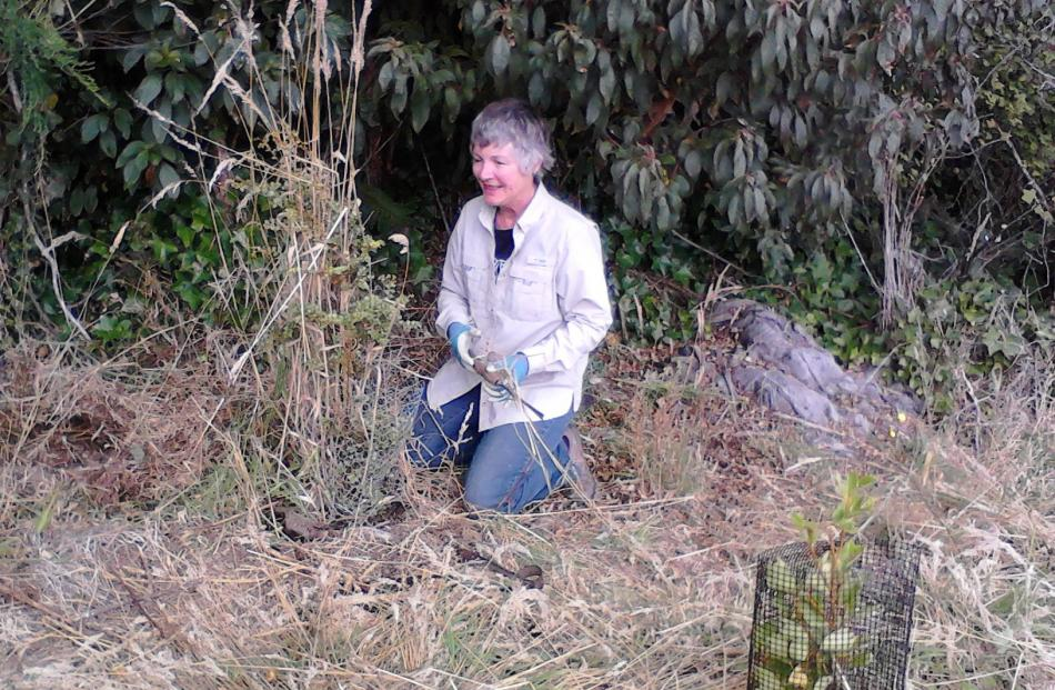 Marie Ballagh at work near the Orokonui Ecosanctuary visitor centre. Photo: Alyth Grant.