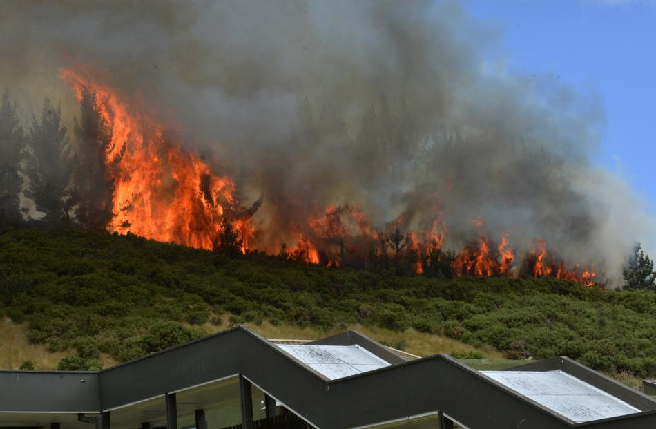 Fire takes hold in trees above Logan Park High School. Photo by Gerard O'Brien.