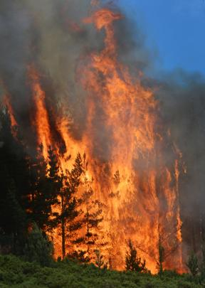 Fire rages through pine trees. Photo by Gerard O'Brien.