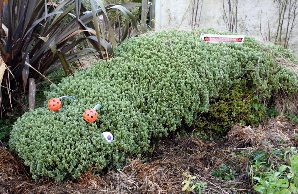 A caterpillar topiary plant at ''Bug City'' in the Catlins. Photo by Janine Thompson.