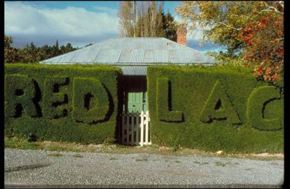 The Redlac (Calder spelled backwards) hedge in Naseby. Photo by Allan Steel.