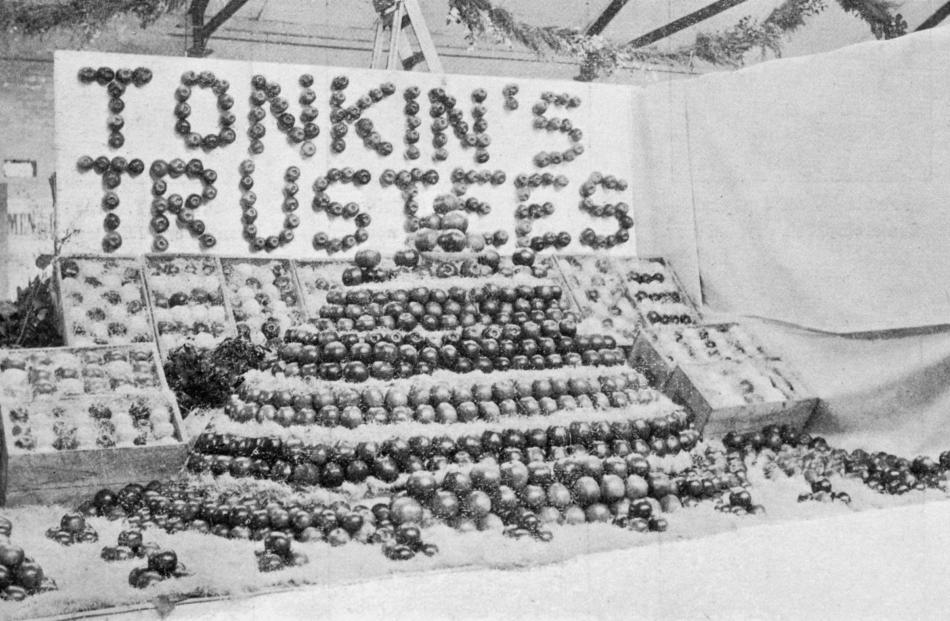 A display of Central Otago apples grown at the Treliske Orchard, in Ettrick, on display at the Otago A and P winter show in June 1915. Photos from Otago Witness.