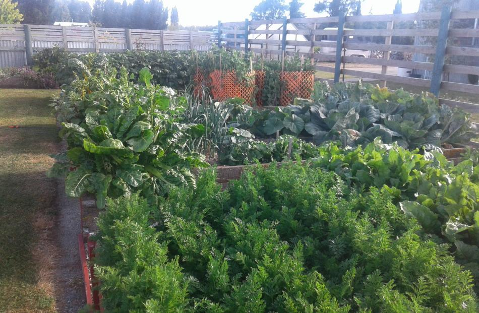Colleen Smillie's vegetable garden, on her Waipiata/Kyeburn Rd property, was brimming with great...