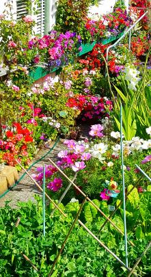 Margaret Manning combines flowers with vegetables in her Ravensbourne garden, which she calls her...