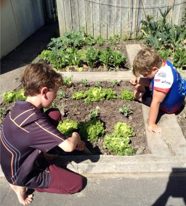 Warrington School pupils Arlo Bickerstaff and Roland Ozanne do some weeding in the school's vege...