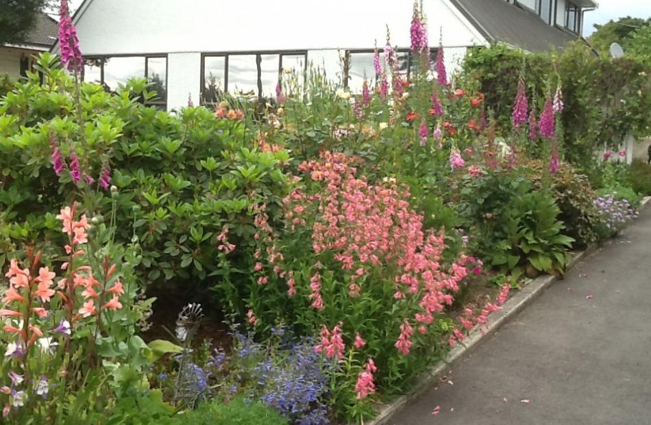 Denise Robertson, of Oamaru, calls her garden a ``licorice allsort''.