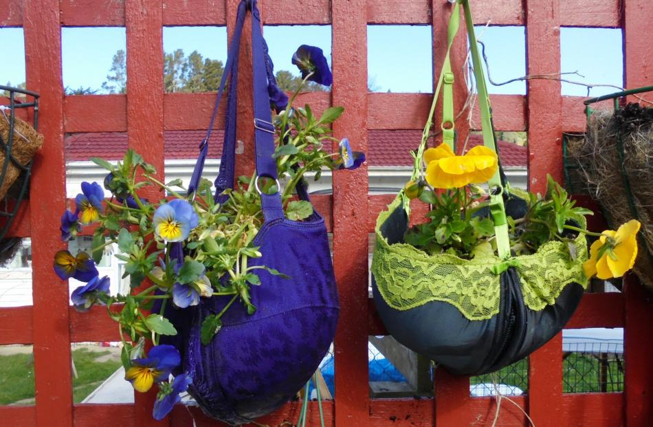 Kaitrin McMullan's Northeast Valley property includes this ''hanging garden of Boobalon'', a...