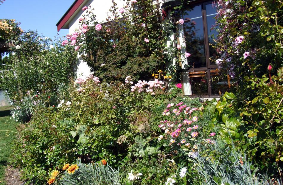 Lesley and Bill McIntosh's large flower garden at their Thames Highway, Oamaru, property, which...