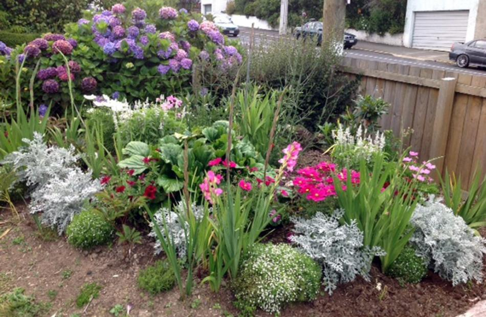 Faye Bretherton is happy with the first season flowering in her Wakari garden after conifers were...