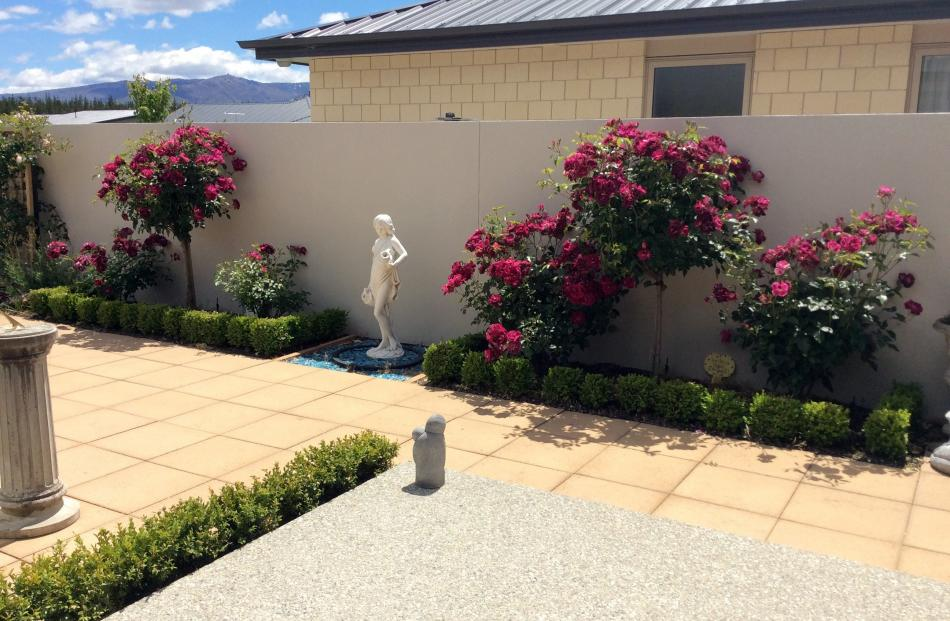 Part of  Jan Robb's small, compact garden in Alexandra with the rose ''Burgundy Iceberg'' in full...