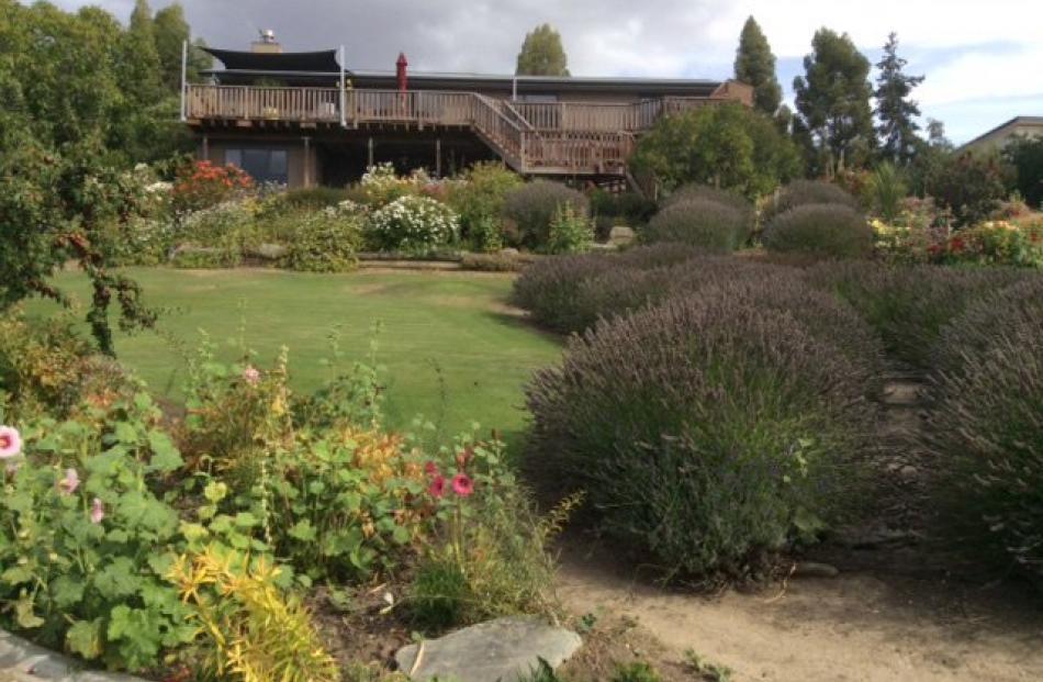 Part of  Suz Allison's garden in Bannockburn this week.