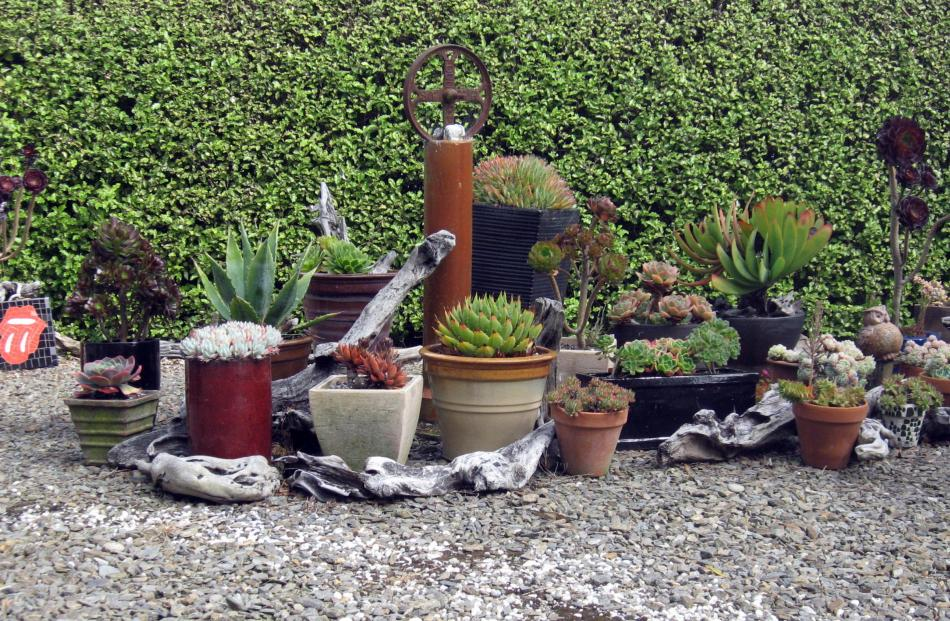 Barrie and Cheryl Mangan's succulent garden at Broad Bay, taken on March 10.