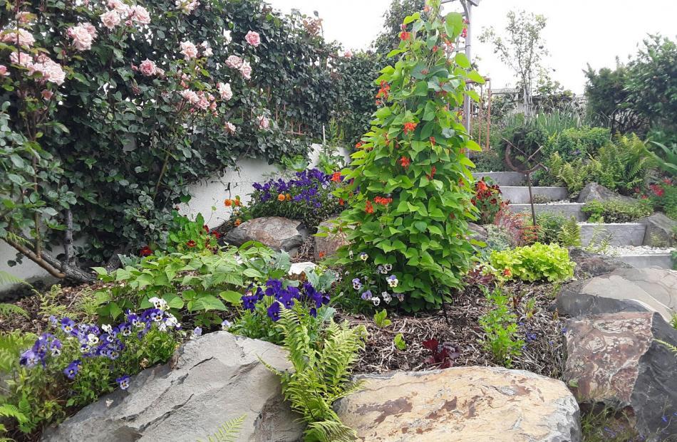 Jan Smith's vegetable garden in Fairfield.