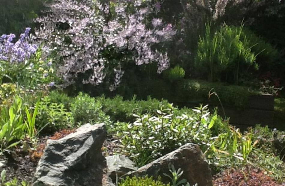 Kay Clark's photo shows part of her raised garden/rockery, with Hebe Hulkeana in flower, in St Clair.