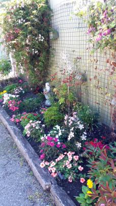 Natalie Mahan's small but colourful garden in Oamaru, viewed from her deck.