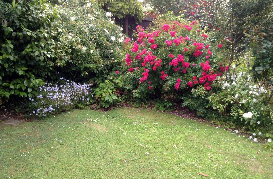 Part of a border of Noeline Rhodes' garden in Lynwood Ave, Maori Hill. Photo taken on New Year's...