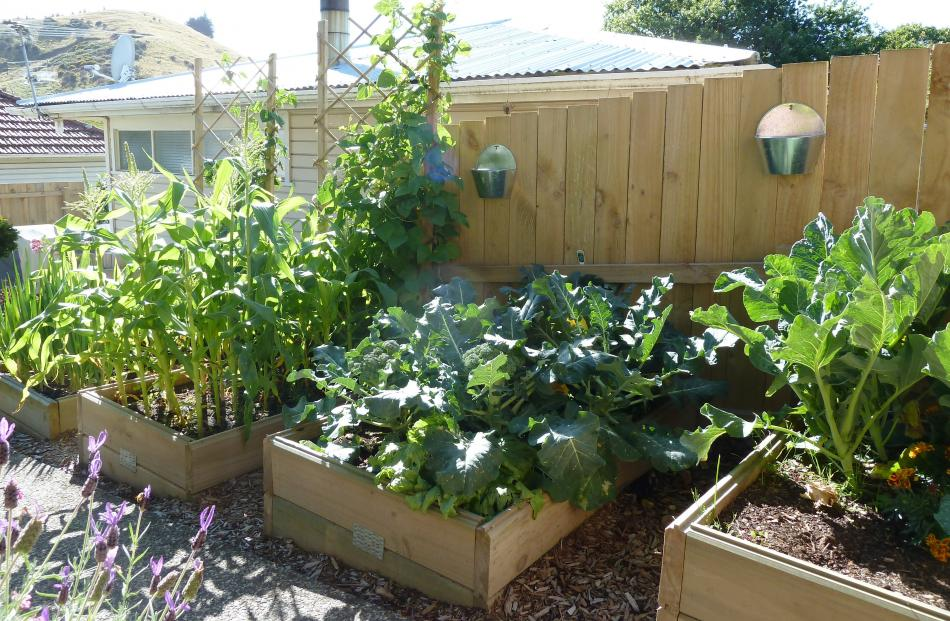 The vegetables were thriving  last week in Wendy Miller's Concord garden. ''My husband built...
