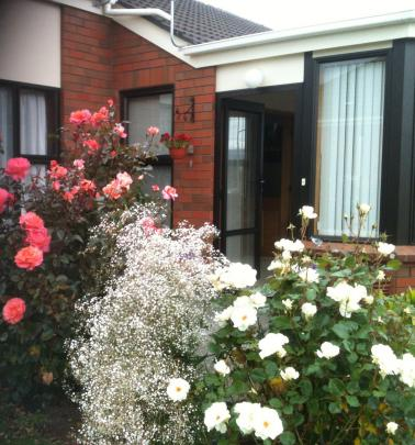 Roses and gypsophila feature in Sharron Mayfield's garden in Mosgiel. The pink rose is ''Paddy...
